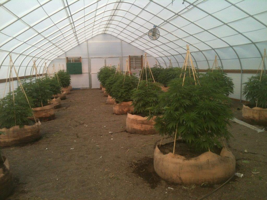 Solexx Greenhouse Covering For Growing Cannabis